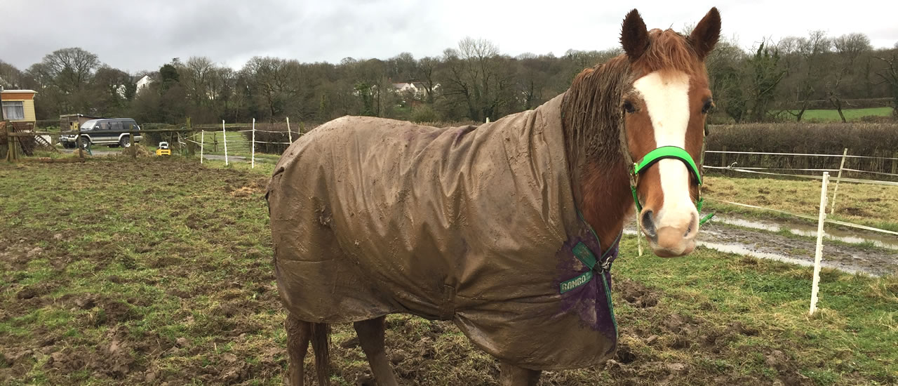 Horse Rug Washing Services in Wales and South Wales